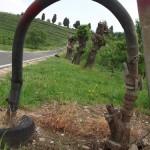 Inizio salita verso il monumento dei granatieri, km 7